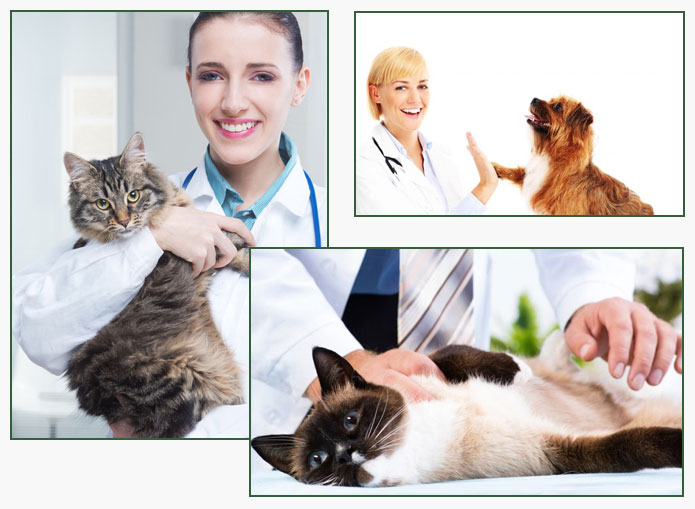 Local Veterinary Clinic Revierview QLD